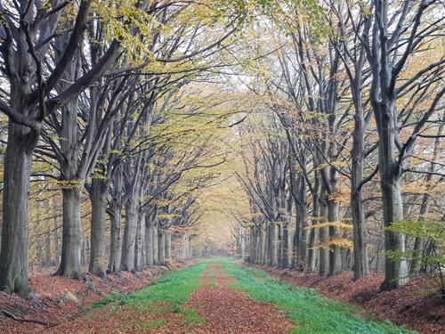 bospad omgeving westerkerkje